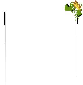 上部画像 - CSS3で作るボックス